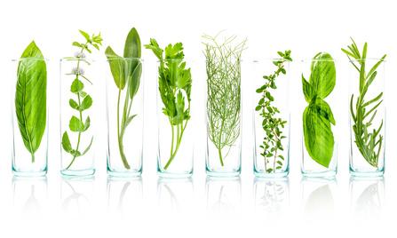 Plant extractsPlant extracts