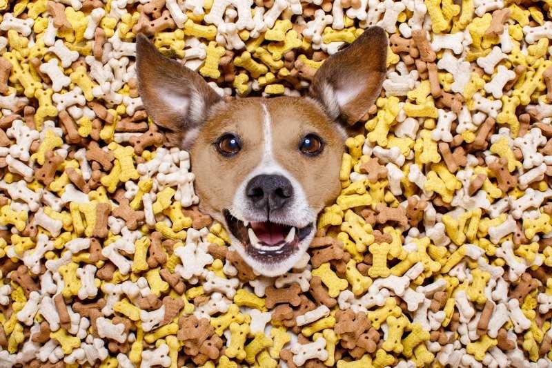 Additivi per alimentazione animaleAdditivi per alimentazione animale