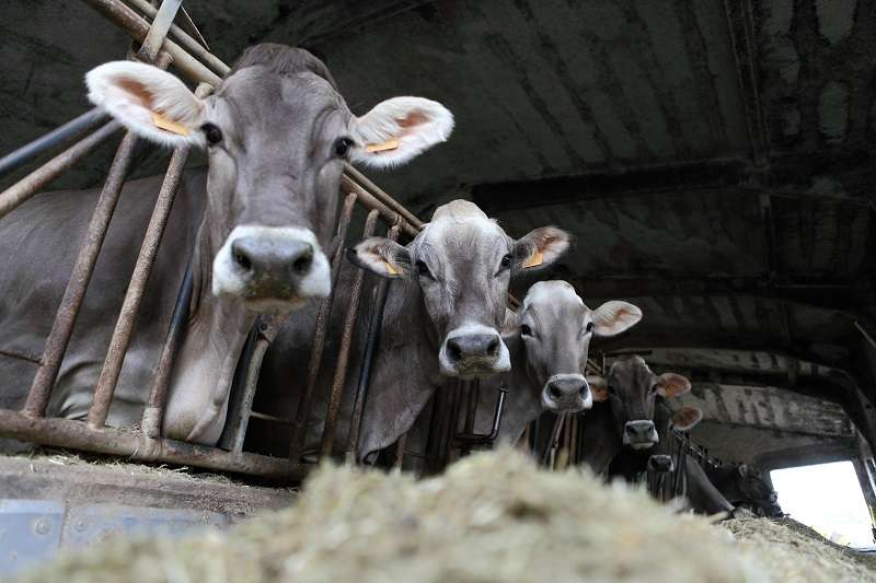 CEKOL AFI per la nutrizione animaleCEKOL AFI per la nutrizione animale