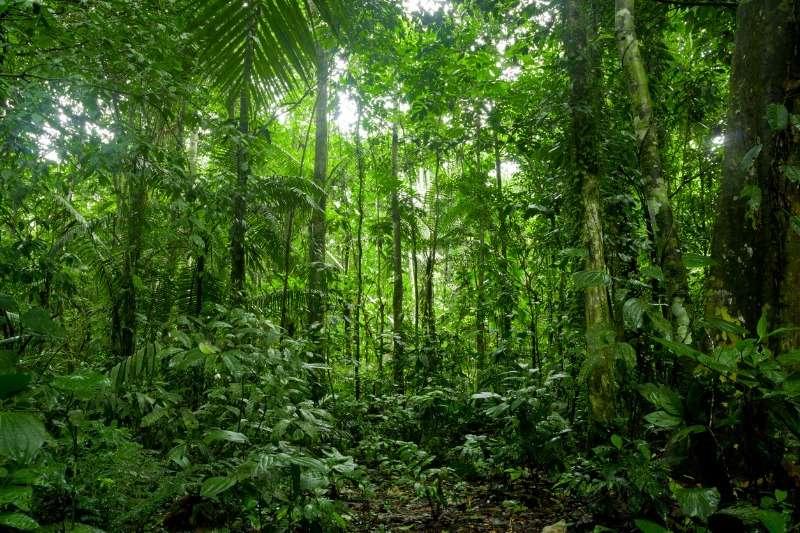 ForestwiseForestwise